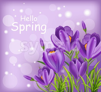 Crocus ultra violet flowers bouquet Vector. Spring background Stock Vector