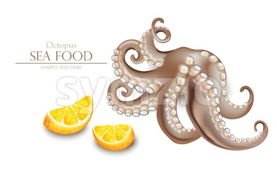 Octopus Vector realistic isolated on white. 3d detailed illustration Stock Vector
