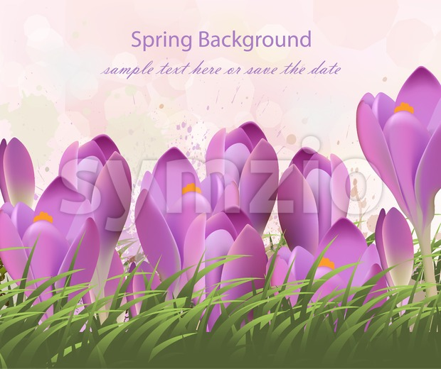 Spring background with purple tulips Vector. Watercolor flowers and green grass. Lovely greeting colorful paint splash illustration Stock Vector