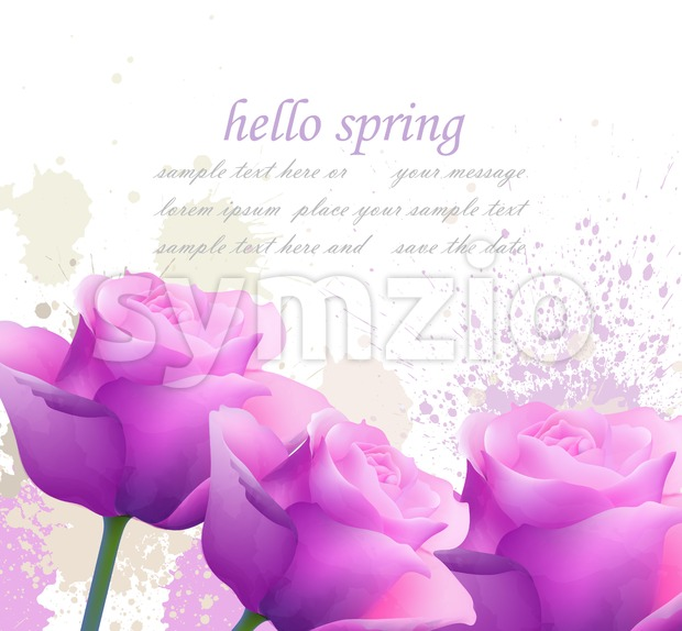 Hello spring violet roses and splash Vector. Romantic passional greeting card template