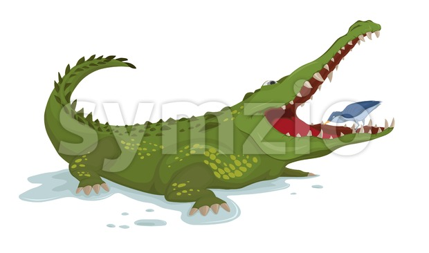 Crocodile and a bird Vector. Cartoon character illustration Stock Vector