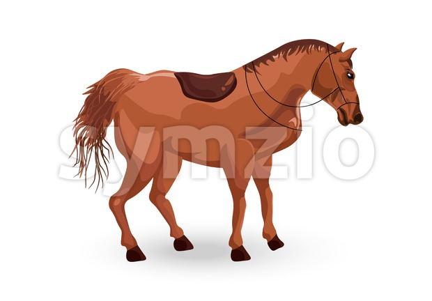 Horse isolated Vector. Elegant Detailed animal illustration
