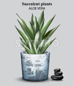 Aloe vera plant Vector. detailed illustration design Stock Vector