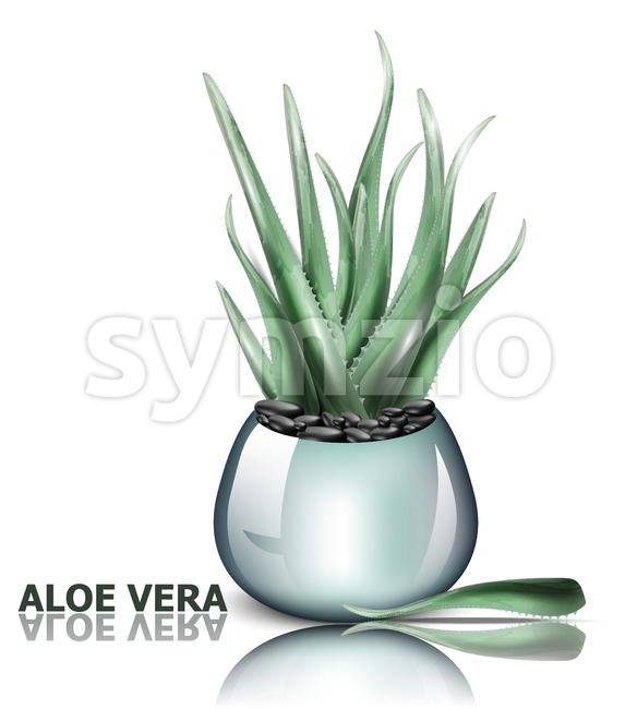Aloe vera plant Vector. 3d detailed illustration design Stock Vector