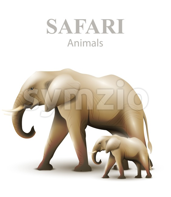 Elephants isolated Vector illustration. Animals wildlife template