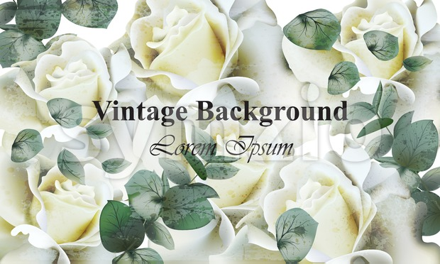 Vintage white roses background Vector. Retro floral design