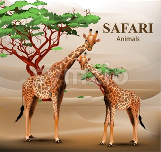 Giraffe safari background Vector. Animals wildlife illustration Stock Vector