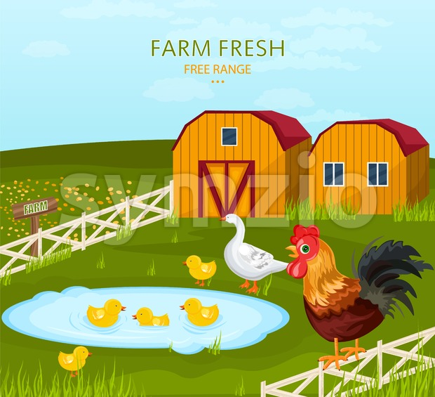 Free range chicken growing in the farm Vector illustration Stock Vector