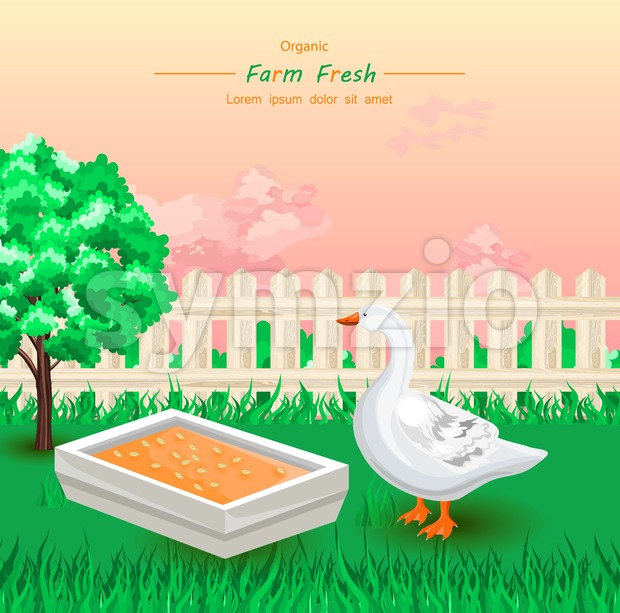 Goose eating Organic fresh food in the farm Vector illustration Stock Vector