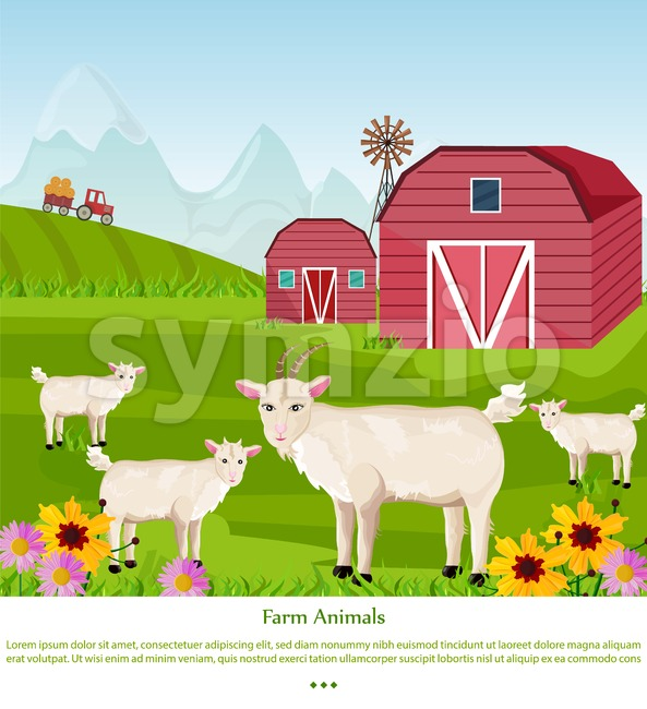 Goats at the farm Vector. Red village house. green summer background Stock Vector