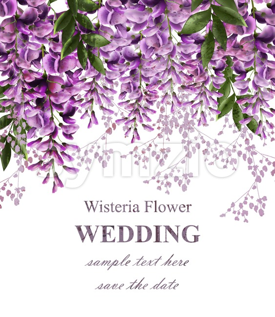Wedding invitation card with wisteria flowers Vector. Beautiful flower decor. Gorgeous nature beauty design