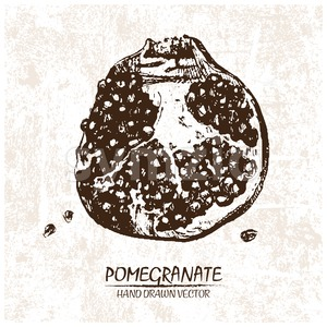 Digital vector detailed pomegranate hand drawn Stock Vector