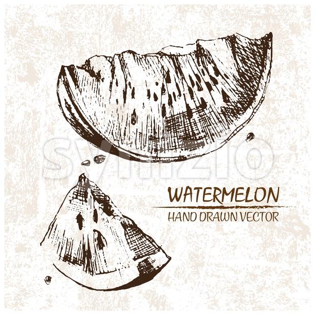 Digital vector detailed watermelon hand drawn Stock Vector