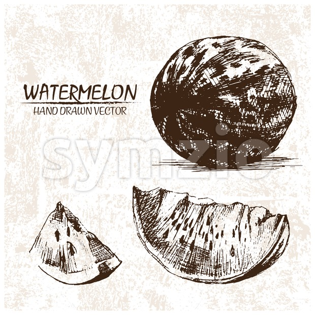 Digital vector detailed watermelon hand drawn Stock Vector