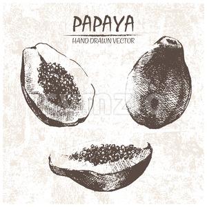 Digital vector detailed papaya hand drawn Stock Vector