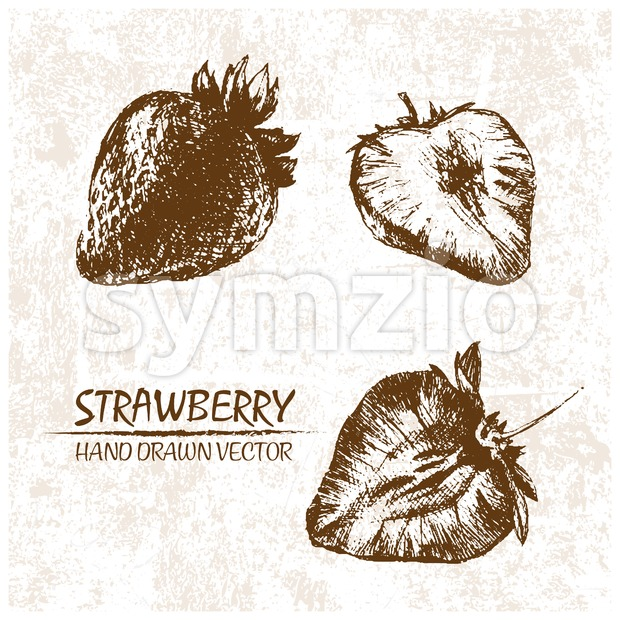 Digital vector detailed strawberry hand drawn Stock Vector
