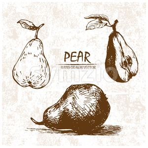 Digital vector detailed pear hand drawn Stock Vector