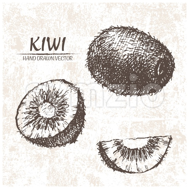 Digital vector detailed kiwi hand drawn Stock Vector