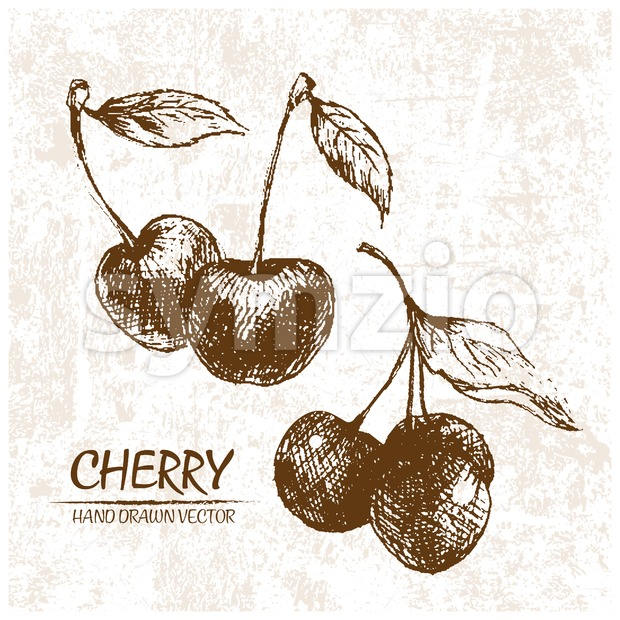 Digital vector detailed cherry hand drawn Stock Vector