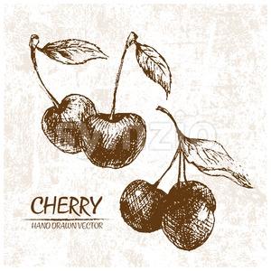 Digital vector detailed cherry hand drawn Stock Vector