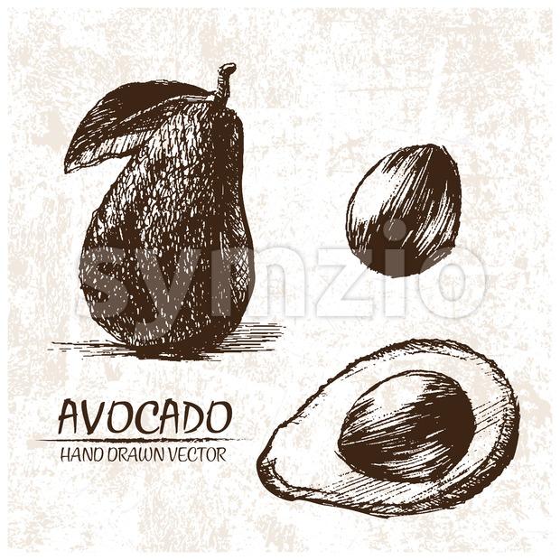 Digital vector detailed avocado hand drawn Stock Vector