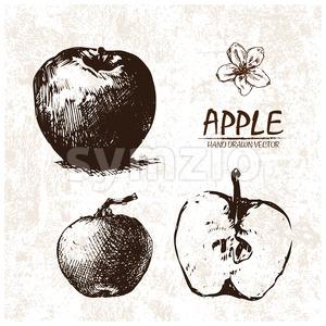 Digital vector detailed apple hand drawn Stock Vector