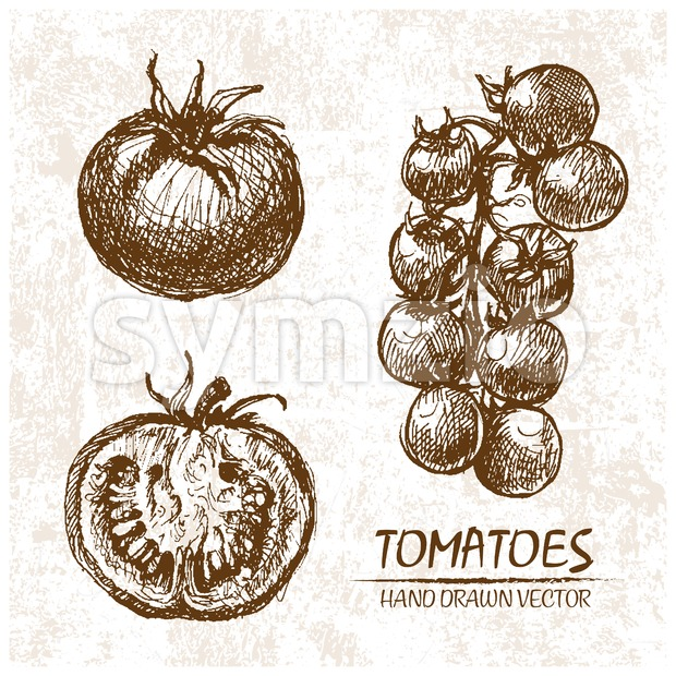 Digital vector detailed tomatoes hand drawn Stock Vector