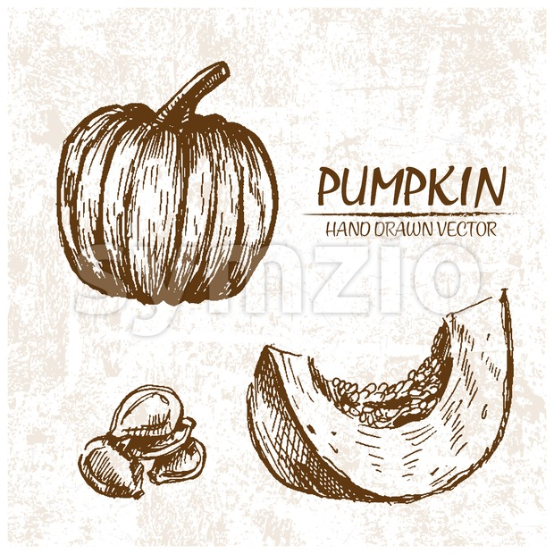Digital vector detailed pumpkin hand drawn Stock Vector
