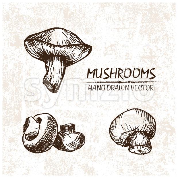Digital vector detailed mushrooms hand drawn Stock Vector