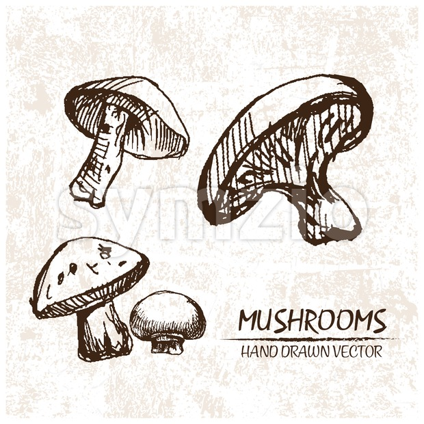 Digital vector detailed mushrooms hand drawn Stock Vector
