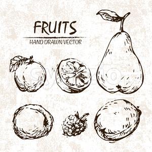 Digital vector detailed fruit hand drawn Stock Vector
