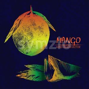 Digital vector detailed mango hand drawn Stock Vector
