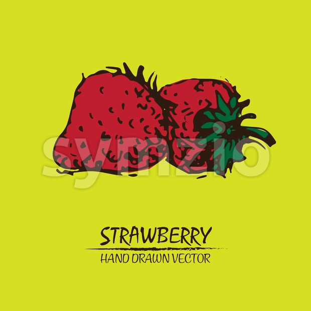 Digital vector detailed color strawberry drawn Stock Vector