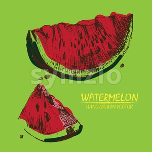 Digital vector detailed color watermelon hand Stock Vector