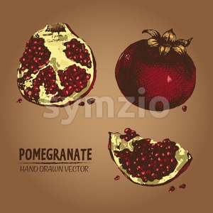 Digital vector detailed color pomegranate hand Stock Vector