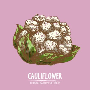 Digital vector detailed color cauliflower hand Stock Vector
