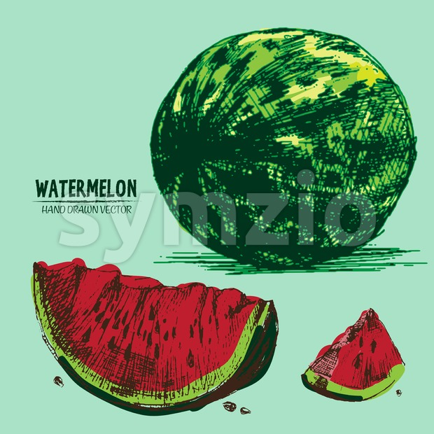 Digital vector detailed color watermelon hand Stock Vector