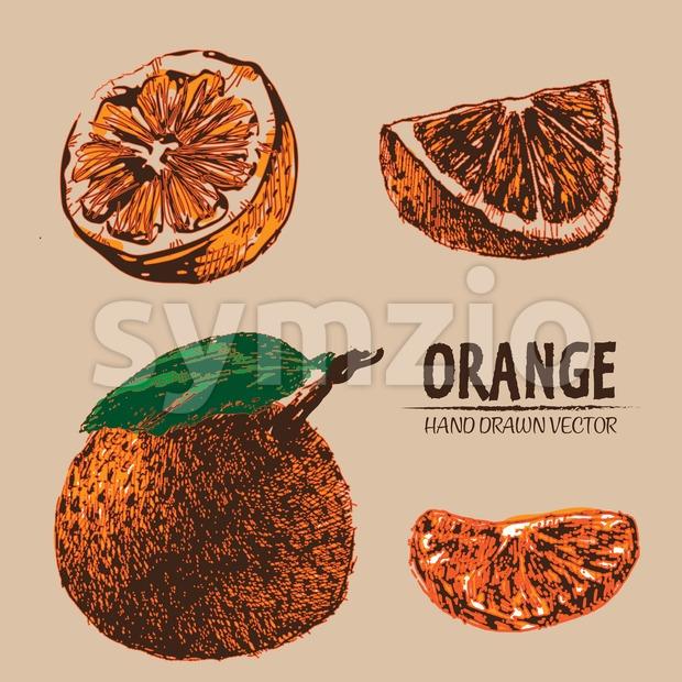 Digital vector detailed color orange hand drawn Stock Vector