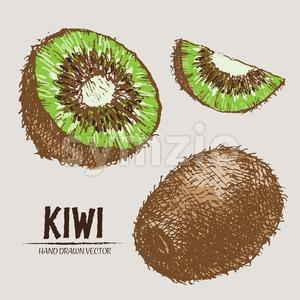 Digital vector detailed color kiwi hand drawn Stock Vector