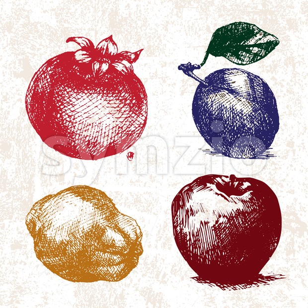 Digital vector detailed color fruit hand drawn Stock Vector