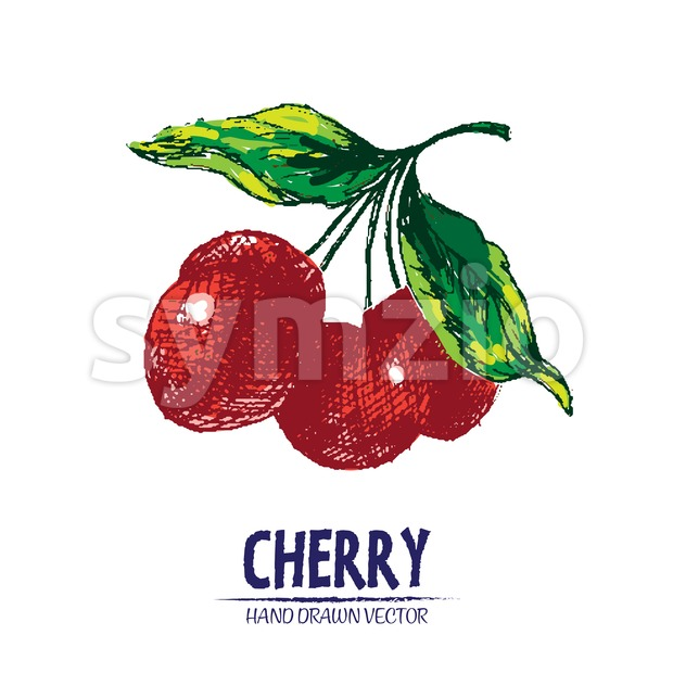 Digital vector detailed color cherry hand drawn Stock Vector