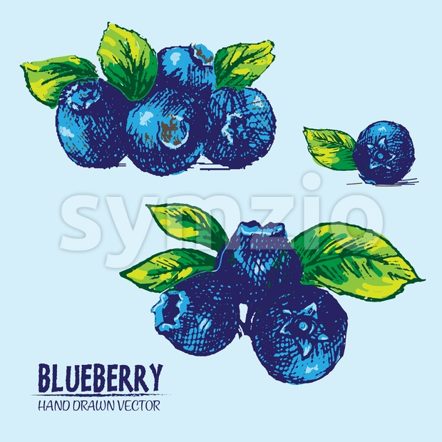 Digital vector detailed color blueberry hand drawn retro illustration collection set. Thin artistic linear pencil outline. Vintage ink flat style, ...