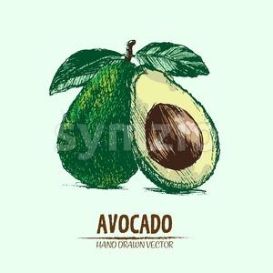 Digital vector detailed color avocado hand drawn Stock Vector