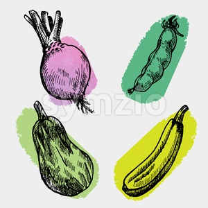 Digital vector detailed color cabbage Stock Vector